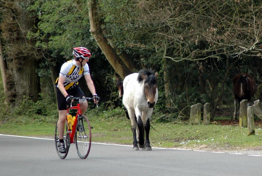 New Forest cyclist